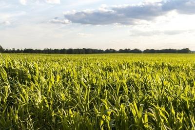 Gobierno argentino rechaza aumentar retención a exportación de granos