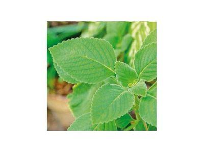 Producción de plantas medicinales