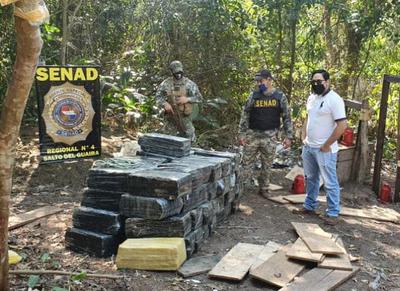 Salto del Guairá:  confiscaron casi 2 toneladas de marihuana y destruyeron un campamento.