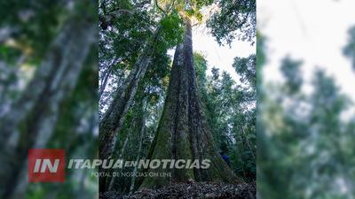 ITAPUA ES CONVOCADA EN EL CONCURSO «COLOSOS DE LA TIERRA»