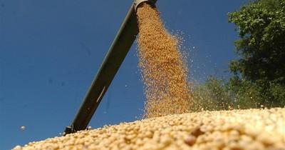 Superficies sembradas de soja y maíz evidencian disminución en zafriña
