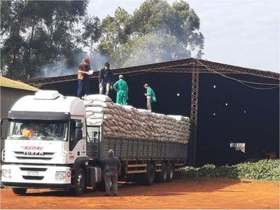Productores   de Itapúa exportan 100 ton. de yerba canchada a Argentina