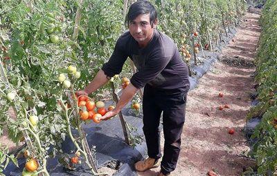 En la crisis, el tomate está dejando buenas ganancias