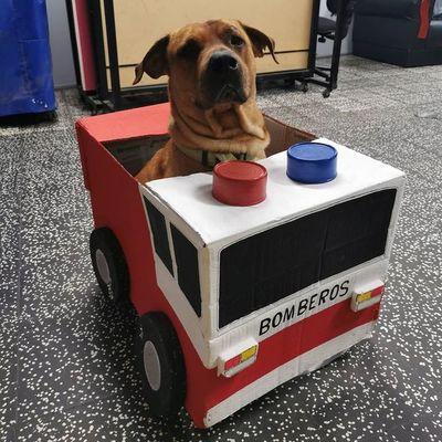 ¡El camarada más tierno! La dedicatoria de los Bomberos de Sajonia a su ayudante peludo por el Día del Perro