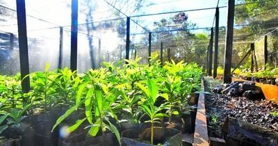 Vivero de Itaipú produjo 666 mil plantines de especies forestales y frutales
