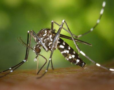 El aumento de la urbanización en África hará que los mosquitos piquen más
