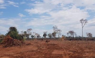 HOY / Imputan a un hombre por presunta deforestación de 1000 hectáreas en San Pedro