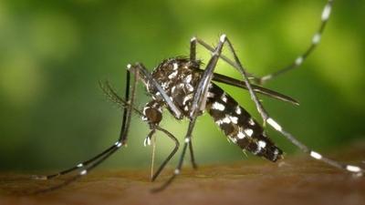 HOY / ¿COVID-19 se transmite por mosquito?: investigación ratifica que no