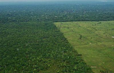 Panel de científicos producirá informe para la conservación de la Amazonia