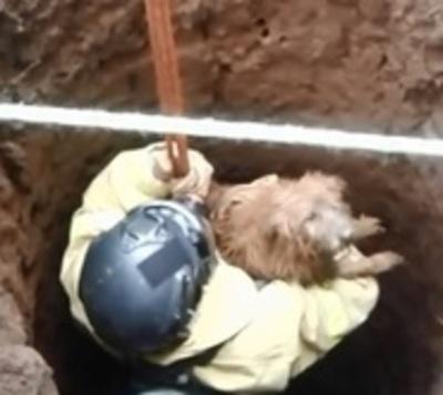 Bomberos rescataron a perros que cayeron a un pozo