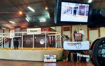 Ferusa vendió el 100% de los Brangus de Élite y Junior Alta Selección, en dos remates