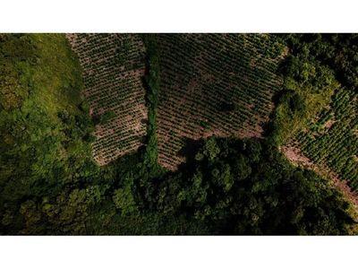 En dos operativos se destruyen 9 ha. de  marihuana en zonas boscosas de Caaguazú
