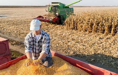 Productores de Alto Paraná no prevén suba de precios de maíz, a pesar de buen rendimiento