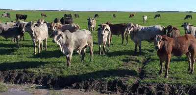 Demanda de la industria y escasa oferta empujan al alza el precio del ganado