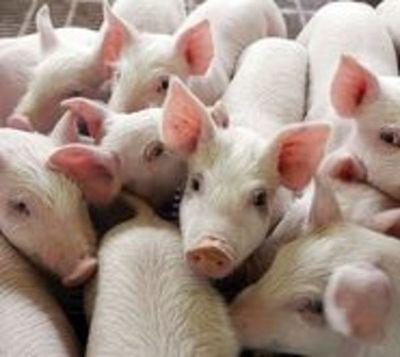 Descubren nueva cepa de influenza en Brasil