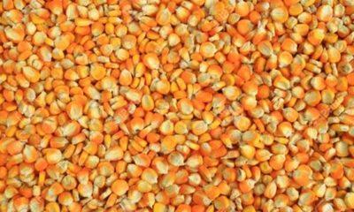 » La tecnología y la certificación de semillas son la base de una producción exitosa
