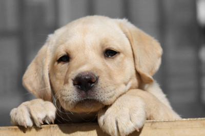 Vacunación y desparasitación gratuita para mascotas en San Lorenzo este sábado