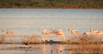 Destino LN: Pantanal chaqueño, el mayor tesoro natural, poco conocido hasta por los paraguayos