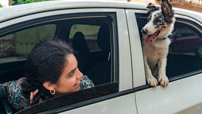 Viajes inclusivos y transporte de mascotas: MUV ofrece nuevas funcionalidades para sus usuarios