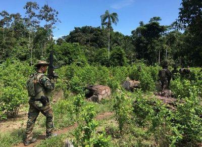 Perú rechaza reporte de EEUU que advierte repunte de producción de cocaína