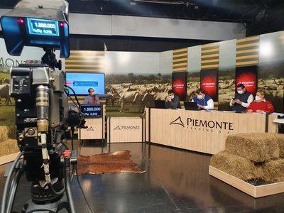 """Piemonte realizó una """"buena feria"""" con """"precios destacados"""" para los desmamantes machos"""