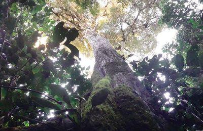 Los bosques desconocidos