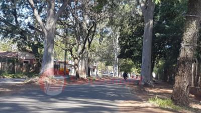 Capilla del Monte: Voltearan árboles por pedido de vecinos