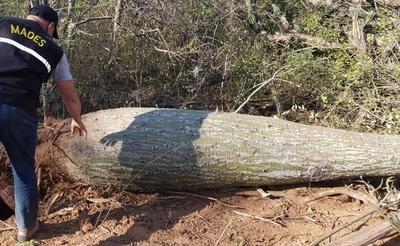 Intervienen un establecimiento por desmonte de la cobertura boscosa en Boquerón