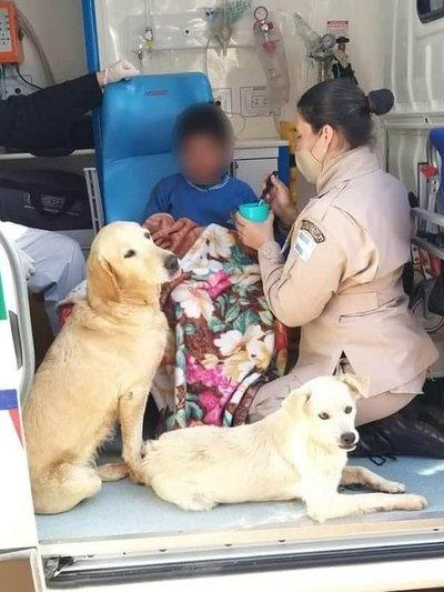 Perros no abandonaron a un niño que fue encontrado luego de 19 horas de desaparecido