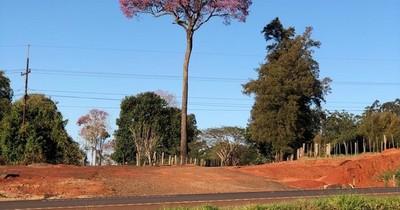 Colosos de la Tierra: 597 árboles están en competencia