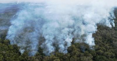 Incansable combate al fuego en el Pantanal, santuario de la biodiversidad