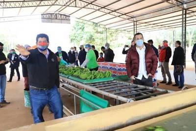 Productores de banana de Cordillera se muestran conformes con la gestión del ministro Friedmann