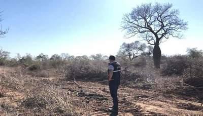 En 48 horas: MADES interviene otro establecimiento en el Chaco por desmonte