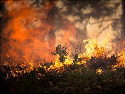 Hay 74.678 incendios forestales  y quemas controladas hasta este mes