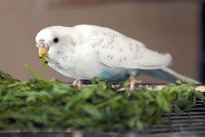 ¿Qué vitaminas necesitan las aves?