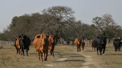 Brangus Paraguay aumenta bonificación para productores por entrega de hacienda