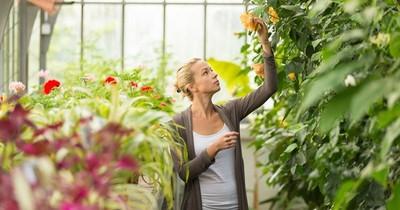 Plantas: qué debemos tener en cuenta a la hora de comprarlas