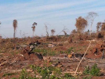 Denuncian megadeforestación en Vaquería