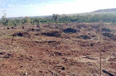 Oikuaauka oîha megadeforestación Vaquería gotyo