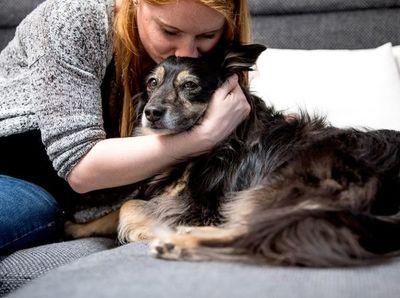Estudio confirma que las personas pueden transmitir el coronavirus a sus mascotas
