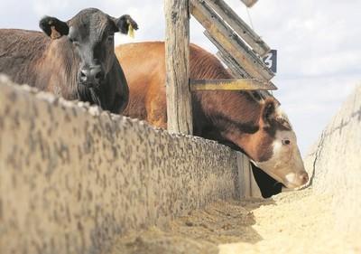 Plena recuperación de la producción de carne de Estados Unidos