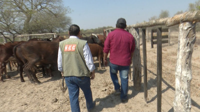 """Nativos se mantienen de ganadería: """"Nosotros lo que queremos es trabajar… no solamente asentarnos y listo"""""""