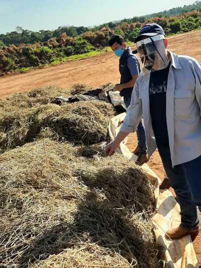 Comision del Senado verifica plantación de cáñamo industrial