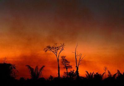 Brasil deforestó más de 1.600 km2 en la Amazonía en julio
