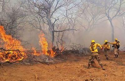 """AniRehaPy"": Campaña de sensibilización para prevención de incendios forestales"