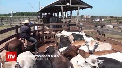 TRAS MESES DE ANGUSTIA, SECTOR GANADERO COMIENZA A RESPIRAR
