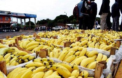 Tembiapora: Productores de bananas, satisfechos con gestión de Ministerio de Agricultura