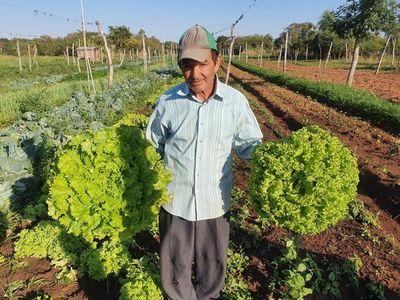 Horticulor de 61 años logra producir 25.000 plantas de lechuga