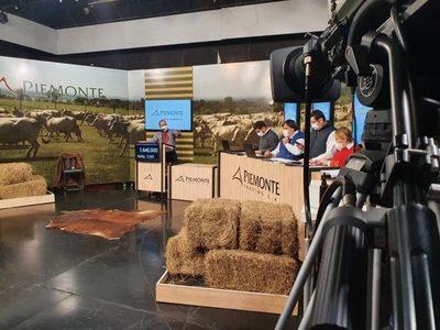 Piemonte vendió 878 animales de invernada en su feria televisada