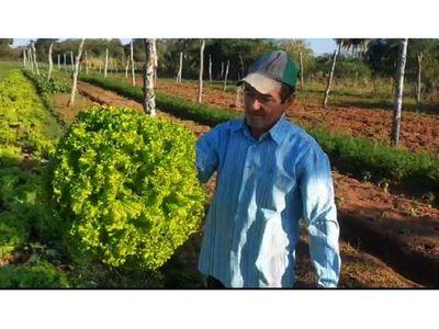 Horticultor de Ko'ê Porã  produce 25.000 plantas de lechuga